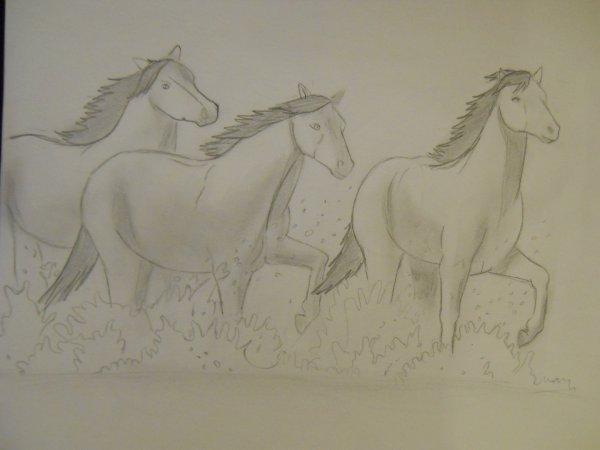 chevaux camarguais.