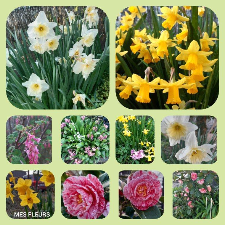 Bon samedi  à  tous,avec mes fleurs magnifique soleil ce matin