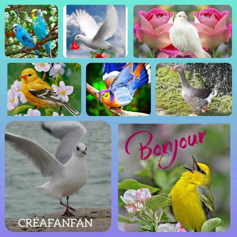 CADEAU POUR TOI MON AMIE  CHRISTIANE,(blog  fleurette )