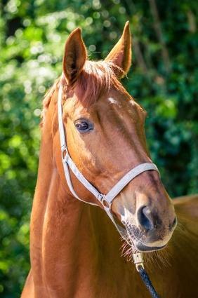 Pour tout  mes amis (es)  qui aiment les chevaux ,bisous bon samedi