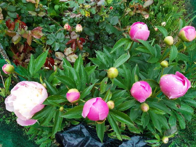 Bonne journée  voici quelques fleurs  de mon jardin