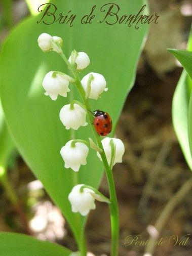 Bon premier mai à vous tous et toutes  bisous