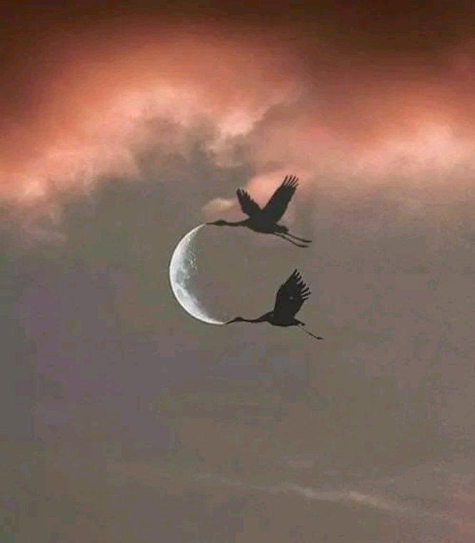 Bonne nuit à tous