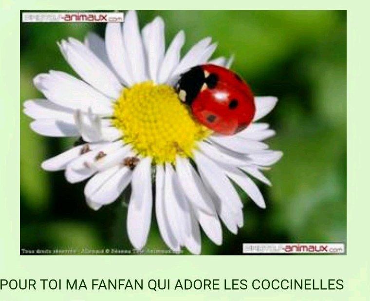 Magnifiques  cadeaux de mon adorable  amie Patou merci beaucoup