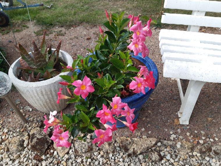 Suite de mes fleurs