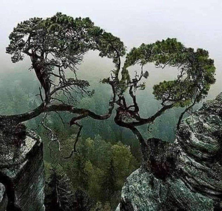 @ J'aime ces arbres ce sont toi et moi  @