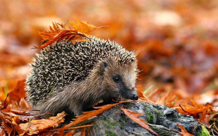 Eh oui l'automne est arrivé  , images du net