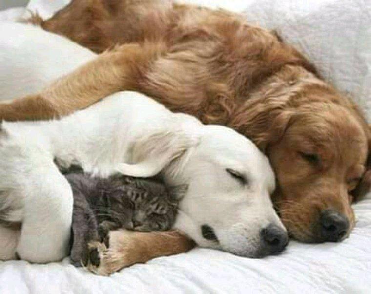 Bonne nuit mes amis ,bisous