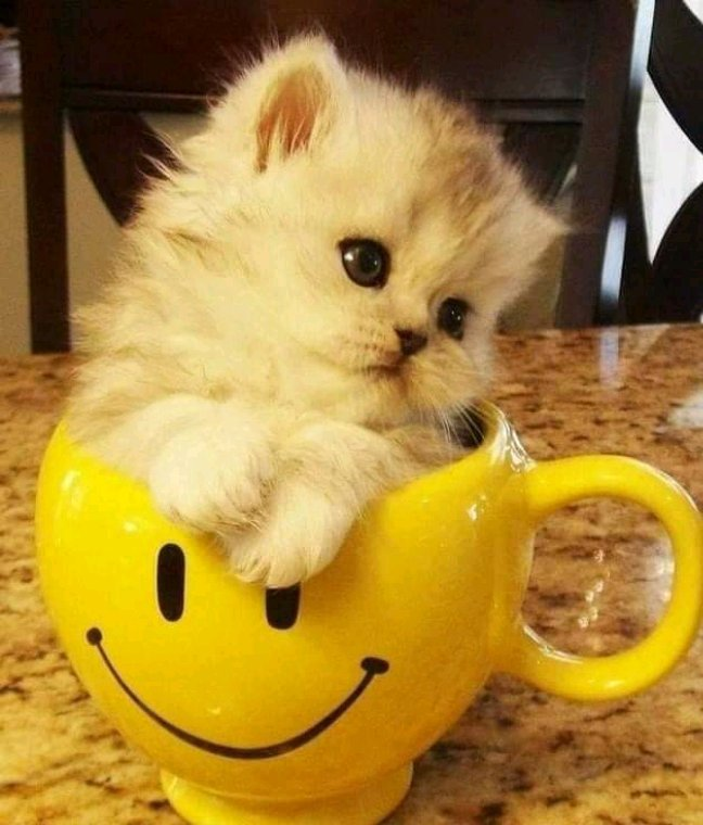 Bonjour bon samedi bonne journée