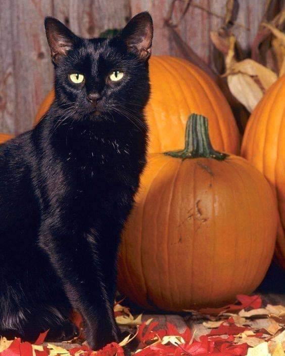 Bonne fête  d Halloween