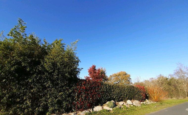 Bon aprés midi ,il fait un magnifique soleil je vais sortir un peu , pas de vent même  trop chaud