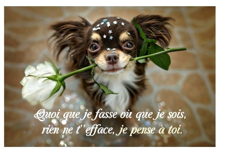♥   Bon mercredi  ♥