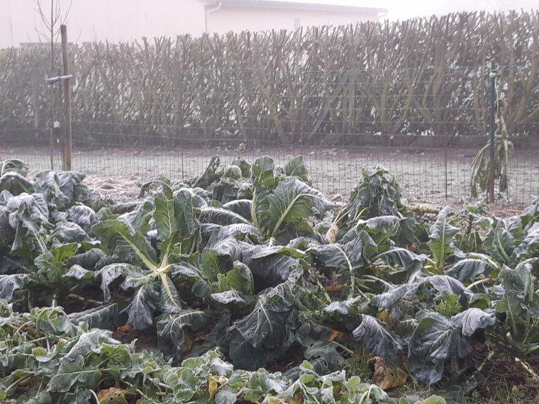 un petit tour dans le jardin ce matin vite fait ,tout est gelé avec un - 2 degrés