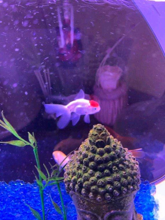 Bonjour  avec les poissons de Mon fils Damien