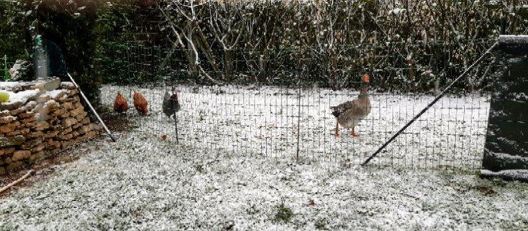 De la neige chez moi aujourd'hui