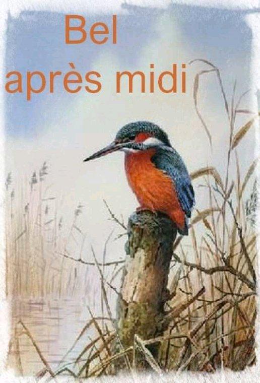 Un peu de couleurs  sur mon blog ,les oiseaux