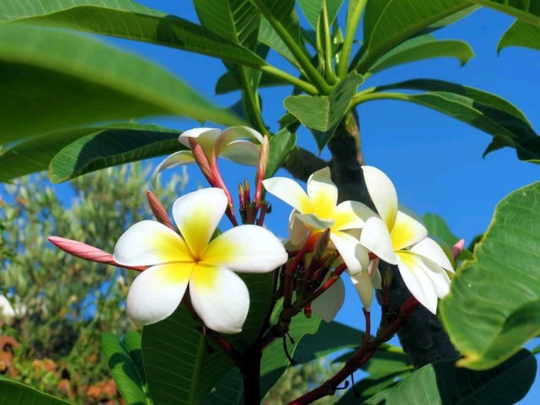 Quelques fleurs pour plus de senteur