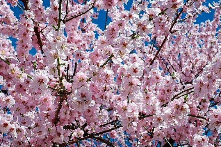Poésie du net  Je te souhaite un agréable printemps avec de gros bisous Pierrot ton ami pour toujours  Et quand à la fin toutes seront prêtes  En robes de noce, en habits de fête, Alors, d'un pays lointain, Arrivera le matin. Et saluant toute la confrérie, Le matin pour voir la terre fleurie, Du bout de son doigt vermeil Rallumera le soleil.  Et pour que l'enfant, mon bel enfant sage,  Voie aussi la terre et son bel ouvrage, II enverra le soleil Le chercher dans son sommeil.  Viens, mon petit, viens voir, chère prunelle,  Pendant ton somme, écoute la nouvelle, Notre jardin s'est levé… Aujourd'hui est arrivé