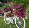 Bon après midi avec des fleurs