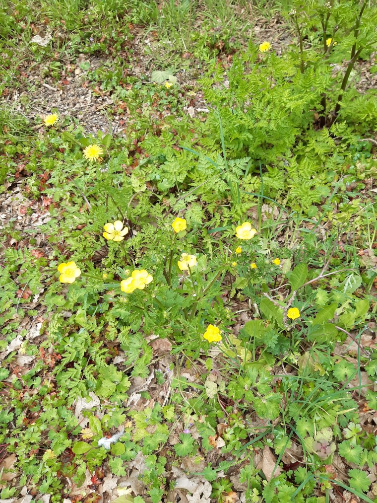Quelques petites fleurs