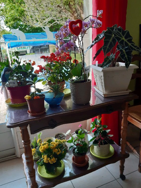 Mais fleurs dans la maison