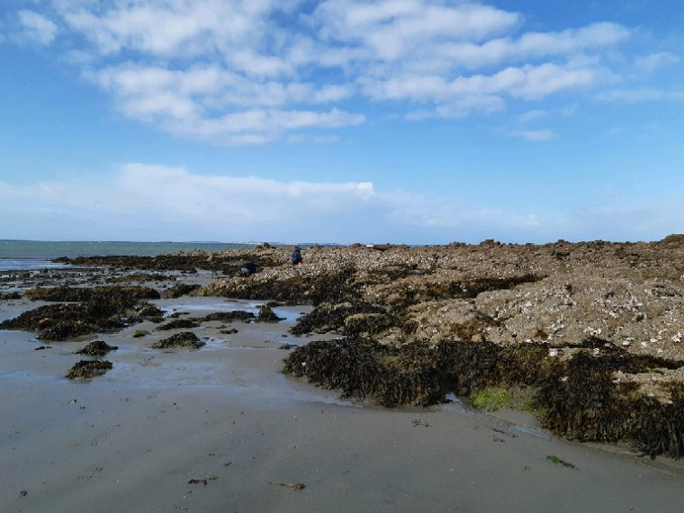 Bon lundi Fanfan aux huîtres à  Carnac
