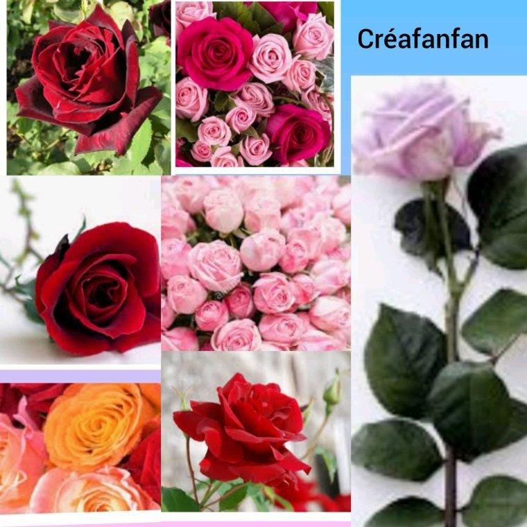 Des roses pour vous , bon jeudi.