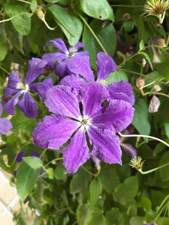 Les fleurs de mon jardin ce moment
