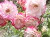 Toujours aussi jolies les fleurs de Claudie , encore merci
