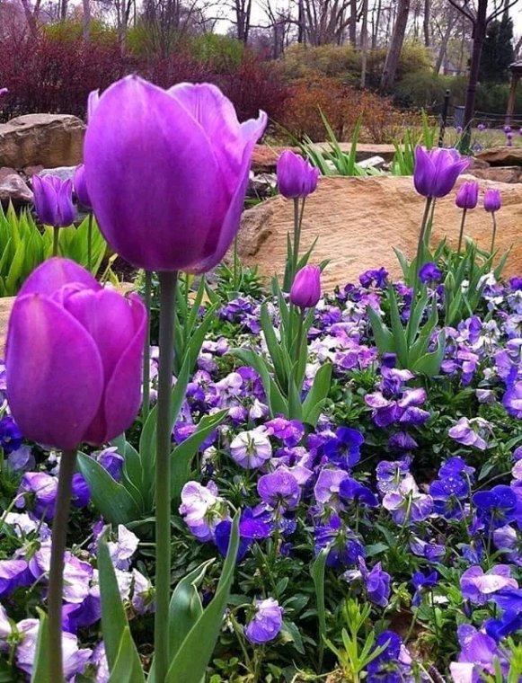 Fleurs pour vous ,prenez si vous aimez