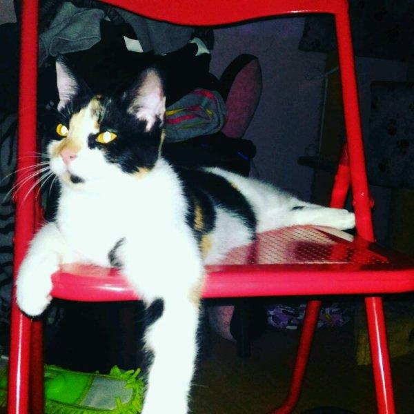Mes amours Kyara & Kitty