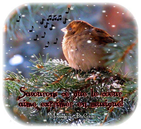 commence a faire froid    pensons a nos  oiseaux  du ciel