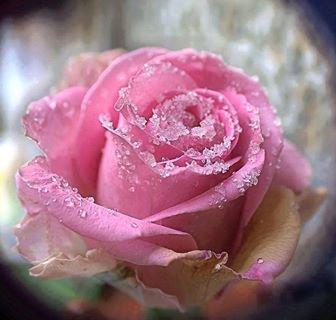 J - 6  ....    un joli poeme  pour vous  tous  mes ami(e)s  virtuel  et aussi reelle  pour d'autre