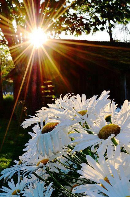 bon dimanche a tous sous le soleil