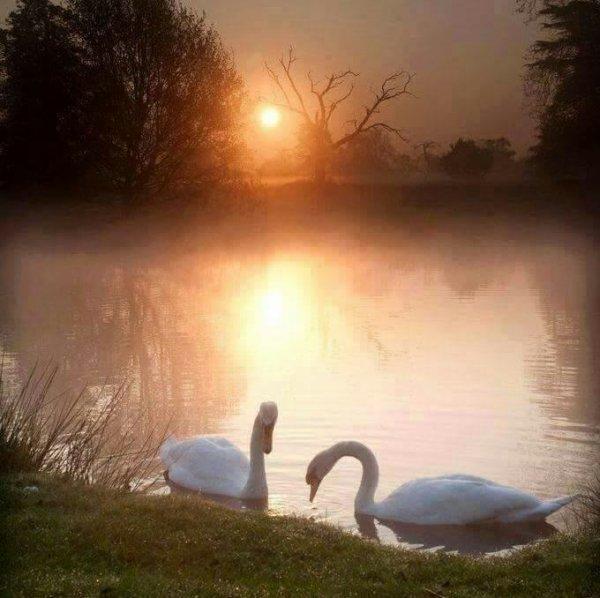 Les beauté  de la nature