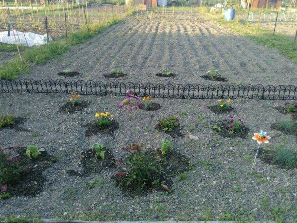 Sa avance tranquillou dans jardin