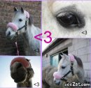 Photo de xx-concours--cheval-xx