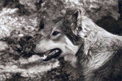 Sabrina E, photographie.