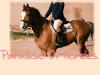 Paradise-Of-Horses