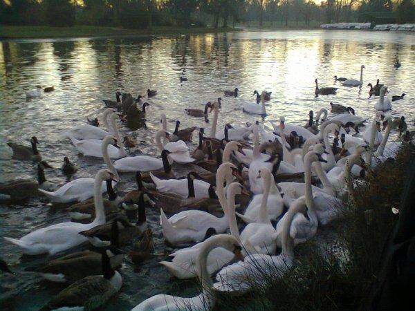 parc de vincennes octobre 2013