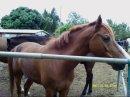 Photo de passion-horse974