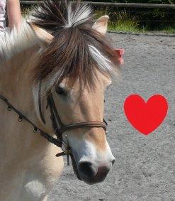lui Danube 1 cheval qui nous a quitter pour 1 monde meilleur