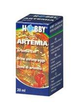 oeufs d artemia