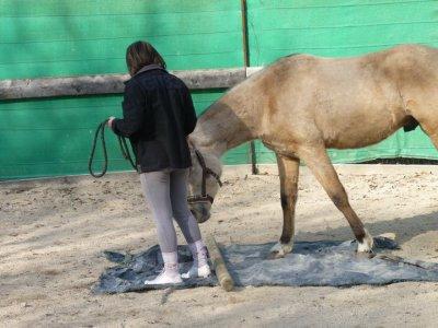 Un poney pas peureux du tout !!