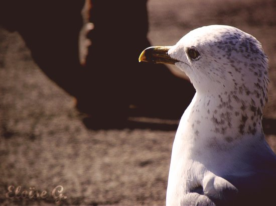 J'veux pouvoir voler comme un oiseau, avoir autant de liberté, découvrir le monde par mes propres moyens... J'aimerais tant voler.