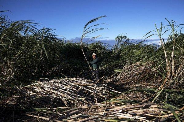 « La Réunion, la promesse d'une île »