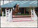 Photo de Chroniques-Equestre
