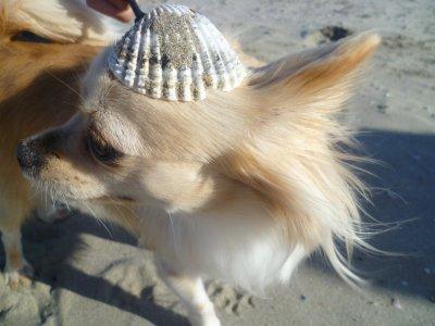 Vamos a la Playa...