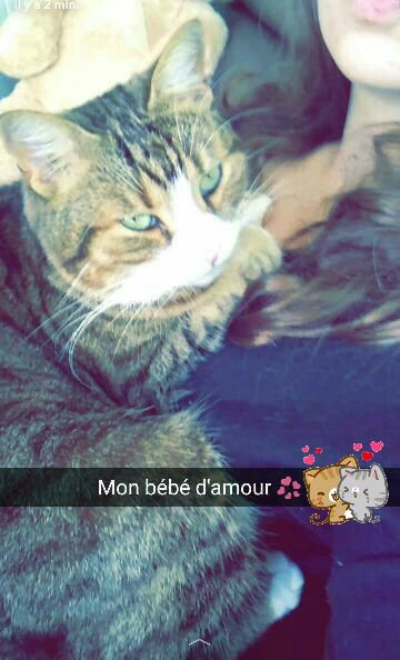 Cécile
