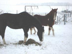 mes pepettes et la neige